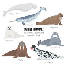 Marine Mammals Set Of Greenland National Park. Polar Animals. Walrus, Harp Seal, Narwhal, Bearded Seal, Hooded Seal, Beluga Whale, Ringed Seal