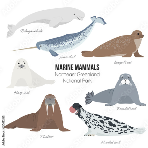 Fototapeta Marine mammals set of Greenland national park