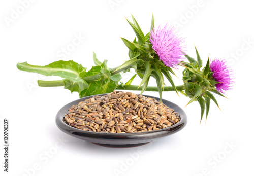 Milk thistle flowers with seeds.