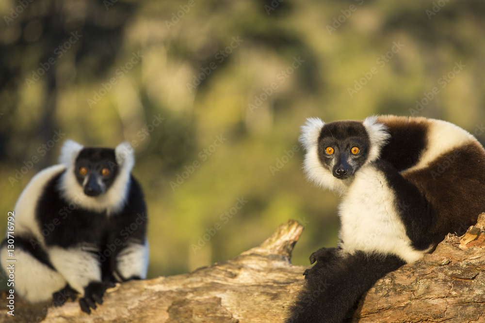 4 what behavioral and physical traits are being favored in lemurs in the changing madagascar environ Organizational behaviour 13th edition schermerhorn  process 281 14 leader traits and behavioral styles 301 part 5  with markets and environ- ments and.