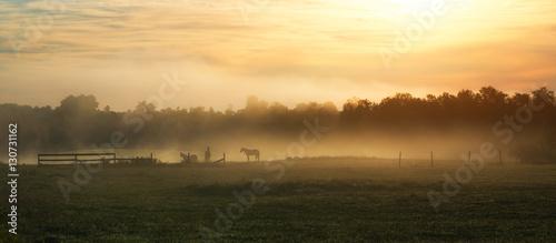 Fotografía  Horses in a foggy field