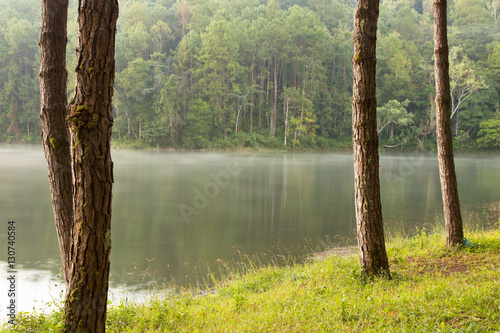 Tranquil scenery of lakeside forest Fototapeta