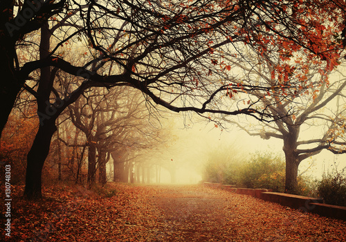 Autumn landscape - foggy autumn Park