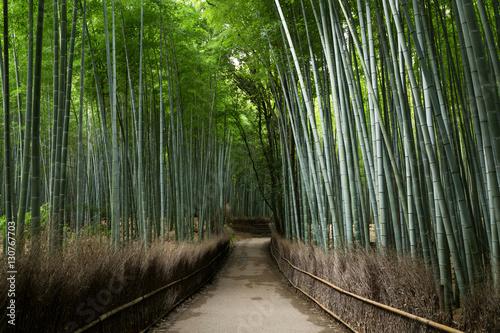 In de dag Zwart Arashiyama Bamboo Groves