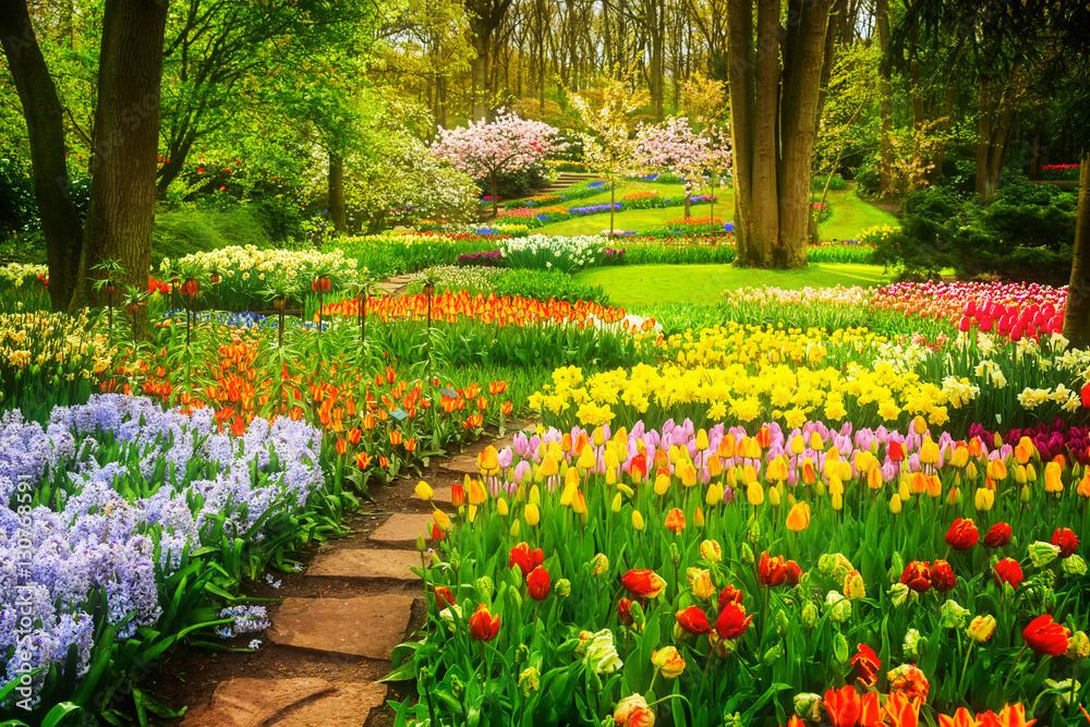 Fototapety, obrazy: Kolorowe tulipany i kamienna ścieżka w wiosennym ogrodzie