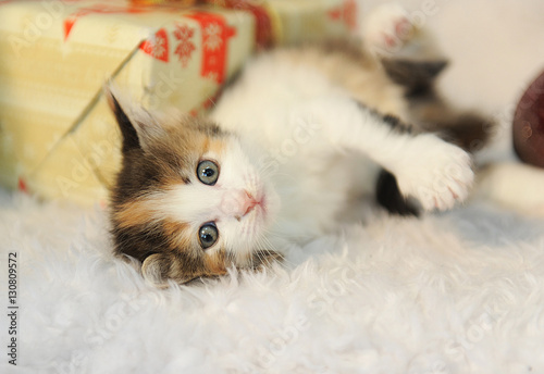 Little cute kitty lies in the interior of the New Year on a white furry rug