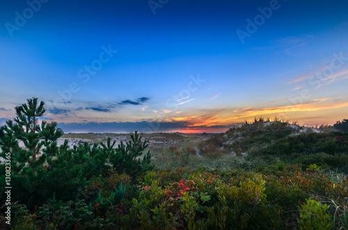 Printed kitchen splashbacks Coast Sunset Over Shrubs