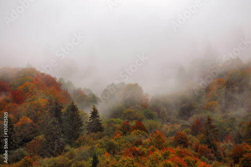 Fotografia  Autumn rain in mountain forest. Colorful wood in clouds of fog