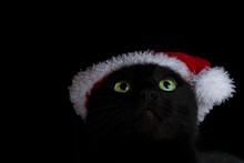 Close Up Of A Green Eyed Black Cat With Santa Hat Looking Up Against A Black Background
