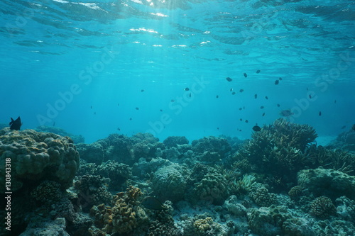 Poster Coral reefs Shallow ocean floor with coral reef and fish, natural scene, Rangiroa lagoon, Pacific ocean, French Polynesia