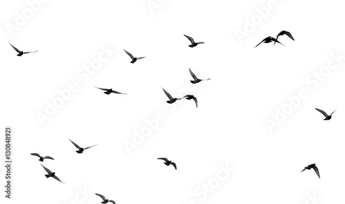 Photo sur Toile Oiseau flock of pigeons on a white background