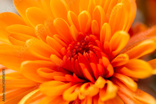 orange flower as a background