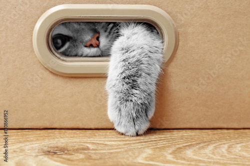 Foto op Aluminium Kat Cute cat in cardboard box
