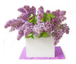 Still life with huge bunch of lilac