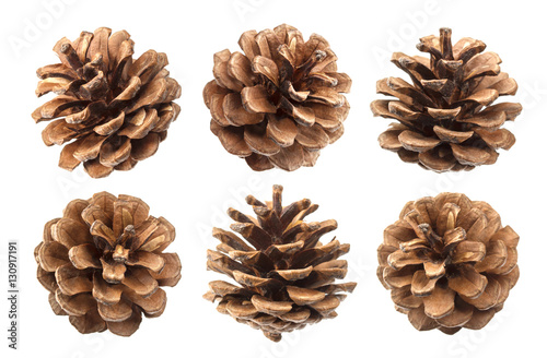 Pinturas sobre lienzo  Pine cones isolated on a white background, with clipping path