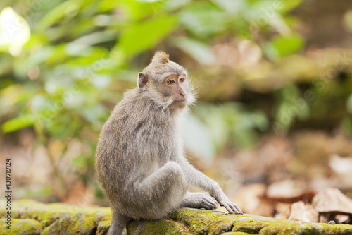 Foto op Plexiglas Indonesië Monkey sitting on a wall in a forest in Indonesia