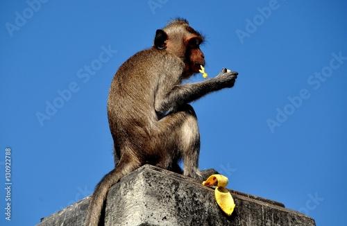 Photo  Bang Saen, Thailand - January 10, 2014:  Long-tailed monkey sitting atop a stone