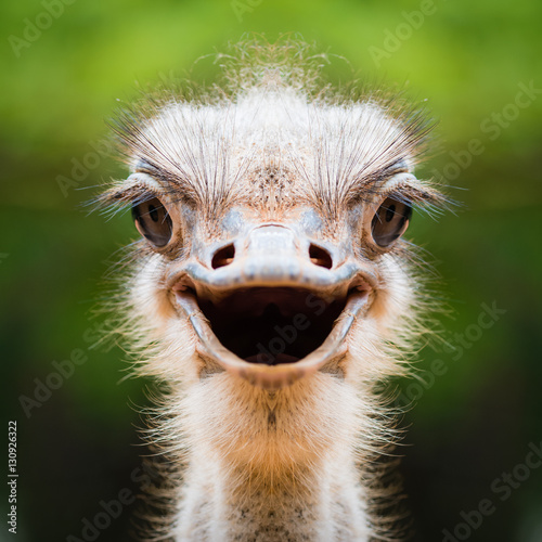 Fotobehang Struisvogel Ostrich face close up