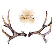 Watercolor Deer Antlers