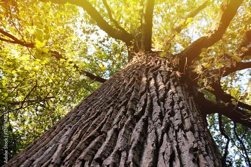 Fotografía  Old big tree in park