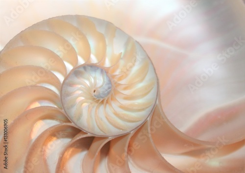 nautilus shell spiral section symmetry cross section spiral half fibonacci golden ratio structure growth close up ( pompilius nautilus )stock, photo, photograph, picture, image,
