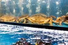 Crabs In Aquarium In Store's S...