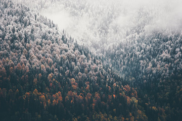 Fototapeta Mgła Foggy Autumn Coniferous Forest Landscape aerial view background Travel serene scenic view