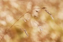 Macro Dry Grass