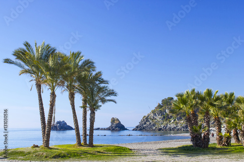 Palm trees on a beach in Almunecar, Andalusia region, Costa del Canvas Print