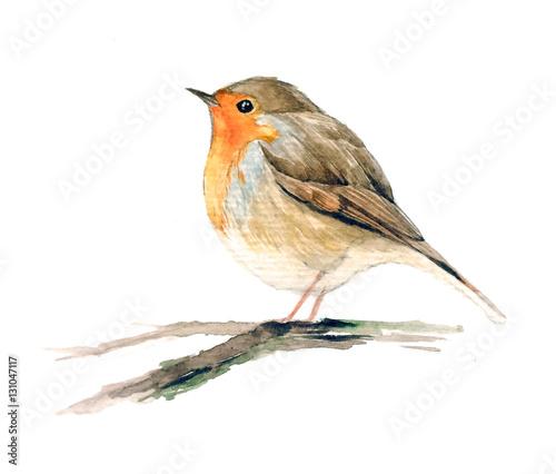 Robin redbreast bird on the branch, European robin Wallpaper Mural
