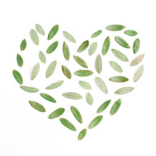 Heart Symbol Made Of Green Petals On White Background. Flat Lay, Top View