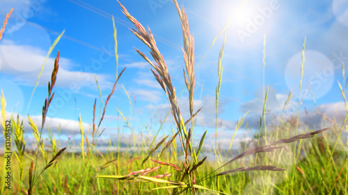 Foto  Meadow landscape in spring