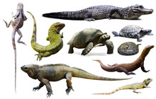 Set Of Reptiles Isolated