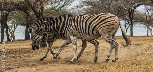 Staande foto Afrika Africa Wildlife