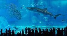 Aquarium Window In Okinawa, Ja...