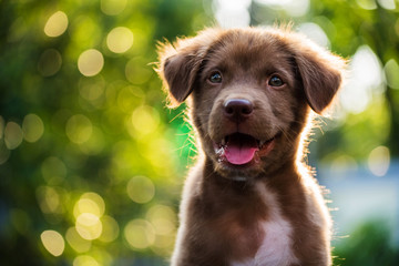 FototapetaPortrait of brown puppy with bokeh background