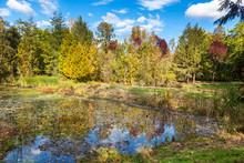 Beaver Habitat In Neighborhood Stormwater Retention Pond