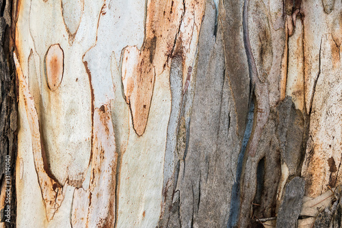 Canvas Prints Textures Texture of eucalyptus bark