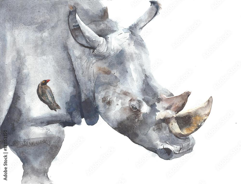 Rhinoceros safari african animal watercolor painting illustration ...