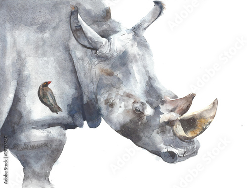 Rhinoceros safari african animal watercolor painting illustration isolated on wh Poster