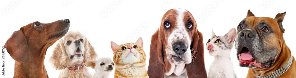 Fototapety, obrazy: Cute friendly pets on white background