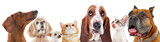 Fototapeta Zwierzęta - Cute friendly pets on white background