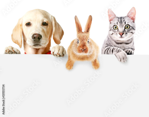 Poster Chien Cute friendly pets on white background