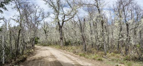 Fotografie, Obraz  National Park Nahuelbuta, South of Chile.
