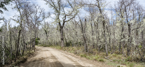 Valokuva  National Park Nahuelbuta, South of Chile.
