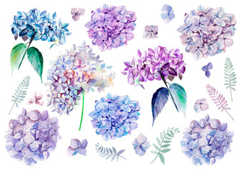 FototapetaWatercolor set with flowers hydrangeas. Illustrations.