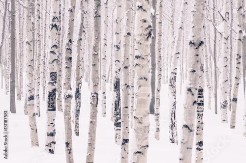 piekny-brzozowy-park-w-zimie-w-mrozie-zakrywajacym-z-sniegiem-wszystko