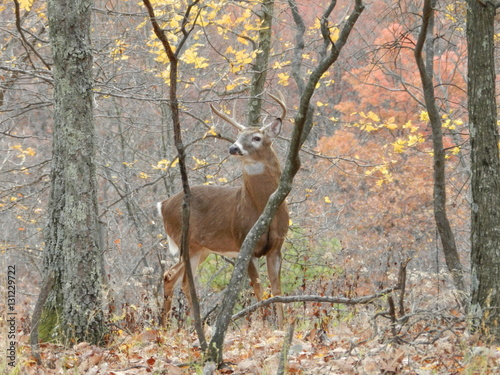 Foto auf Gartenposter Bestsellers Peak of the Rut