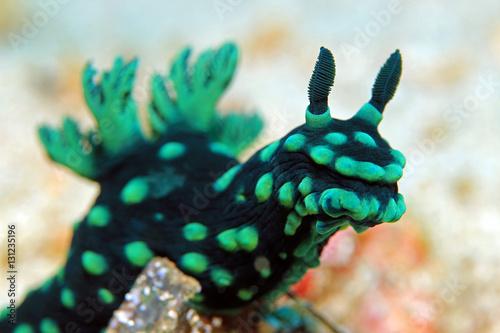 Onder water Close-up of a Cristate Neon Slug (Nembrotha Cristata), Padang Bai, Bali, Indonesia