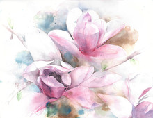 Magnolia Flower Tree Tulip Mag...